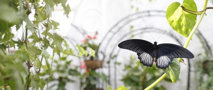 15-Butterfly-Garden_900x381_acf_cropped