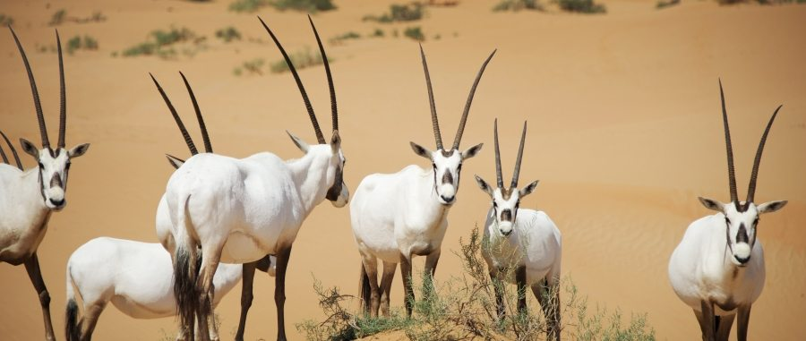 5-Dubai-autour-de-ses-animaux_900x381_acf_cropped